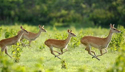 Datian-Slope-Deer-Natural-Reserve