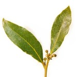 Natural Headache Relieve- Eco-Savy. Bay Leafs