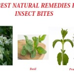 Best Natural Remedies For Insect Bites- http://eco-savy.com