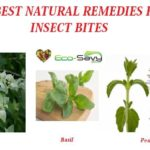 Natural Remedies For Insect Bites