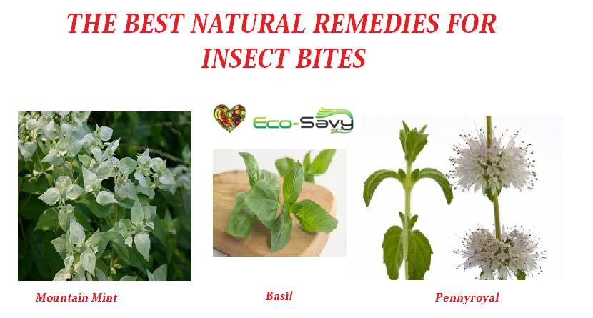 Best Natural Remedies For Insect Bites