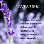 Six Health Benefits of Lavender