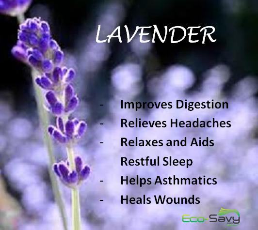 Lavender Health Benefits- Eco-Savy