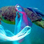 turtle in plastic - eco-savy.com