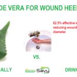 Aloe Vera Uses – Wound Healing